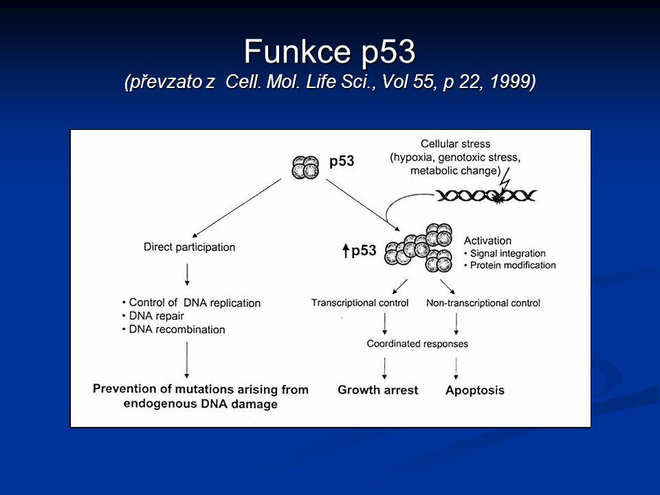 Funkce p53 (převzato z Cell. Mol. Life Sci., Vol 55, p 22, 1999)