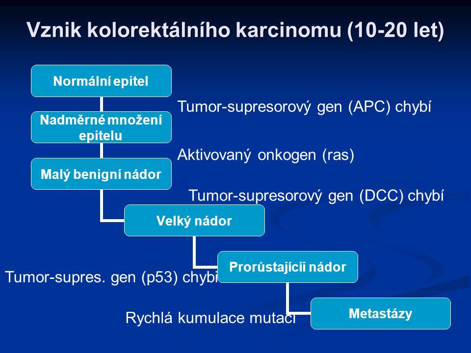 Vznik kolorektálního karcinomu (10-20 let)
