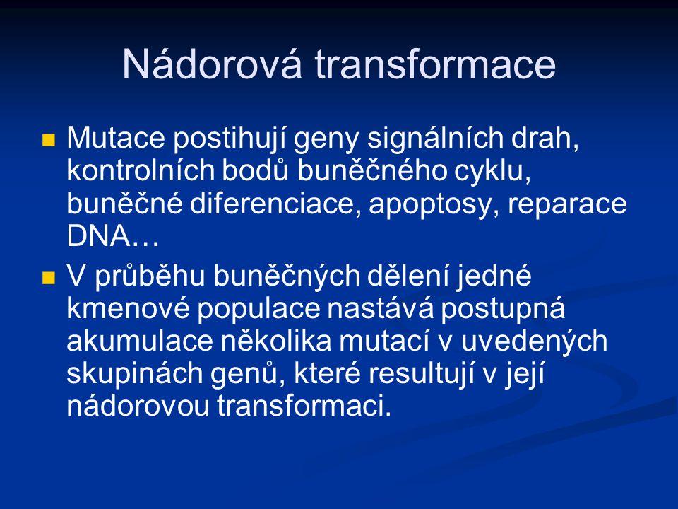 Nádorová transformace