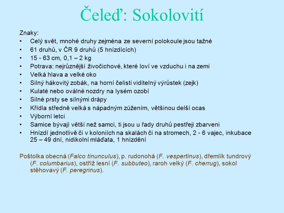 Čeleď: Sokolovití Znaky: