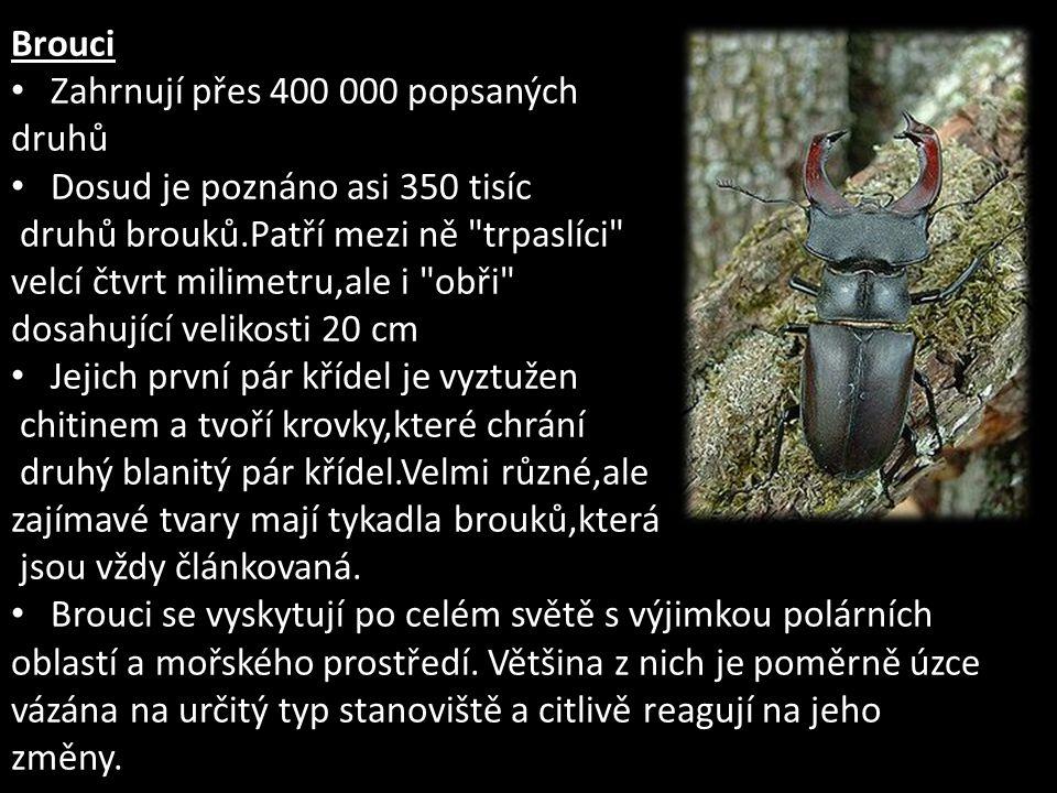 Brouci Zahrnují přes 400 000 popsaných. druhů. Dosud je poznáno asi 350 tisíc. druhů brouků.Patří mezi ně trpaslíci