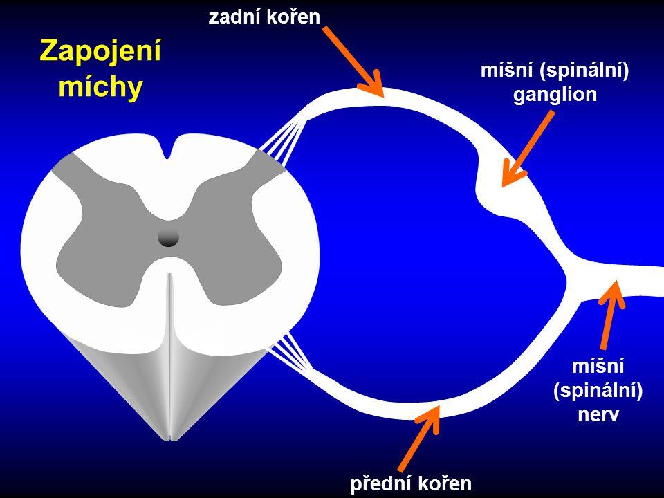 míšní (spinální) ganglion