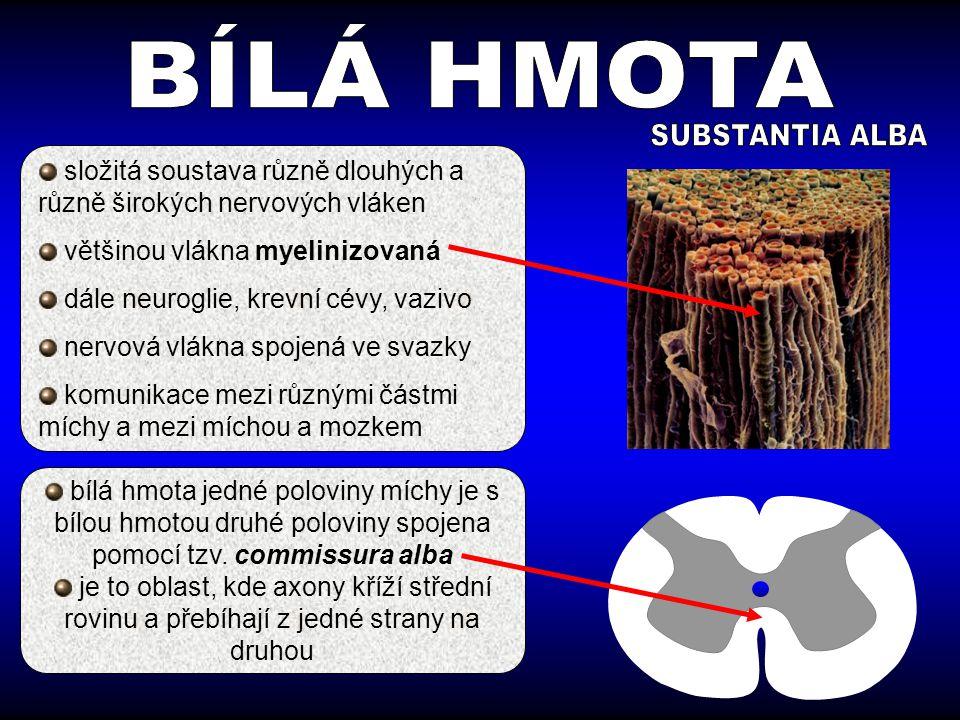 BÍLÁ HMOTA SUBSTANTIA ALBA