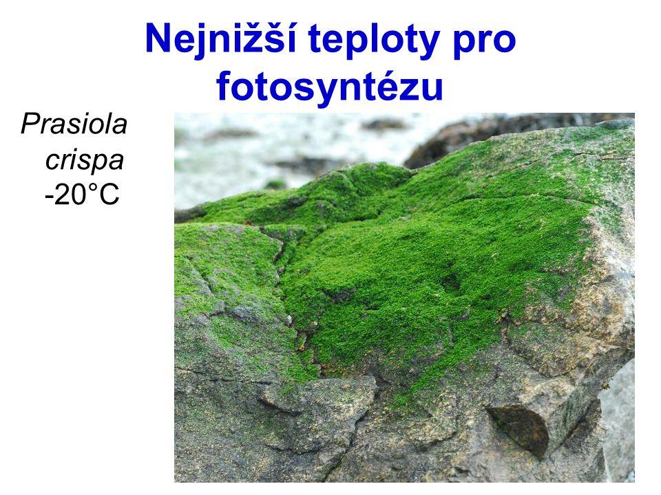Nejnižší teploty pro fotosyntézu