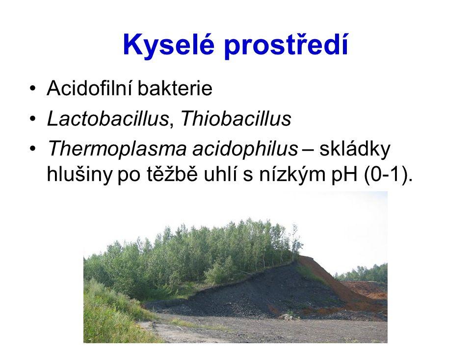 Kyselé prostředí Acidofilní bakterie Lactobacillus, Thiobacillus