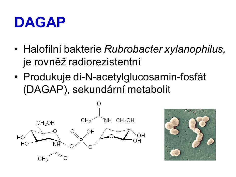 DAGAP Halofilní bakterie Rubrobacter xylanophilus, je rovněž radiorezistentní.