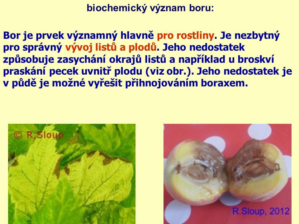 biochemický význam boru: