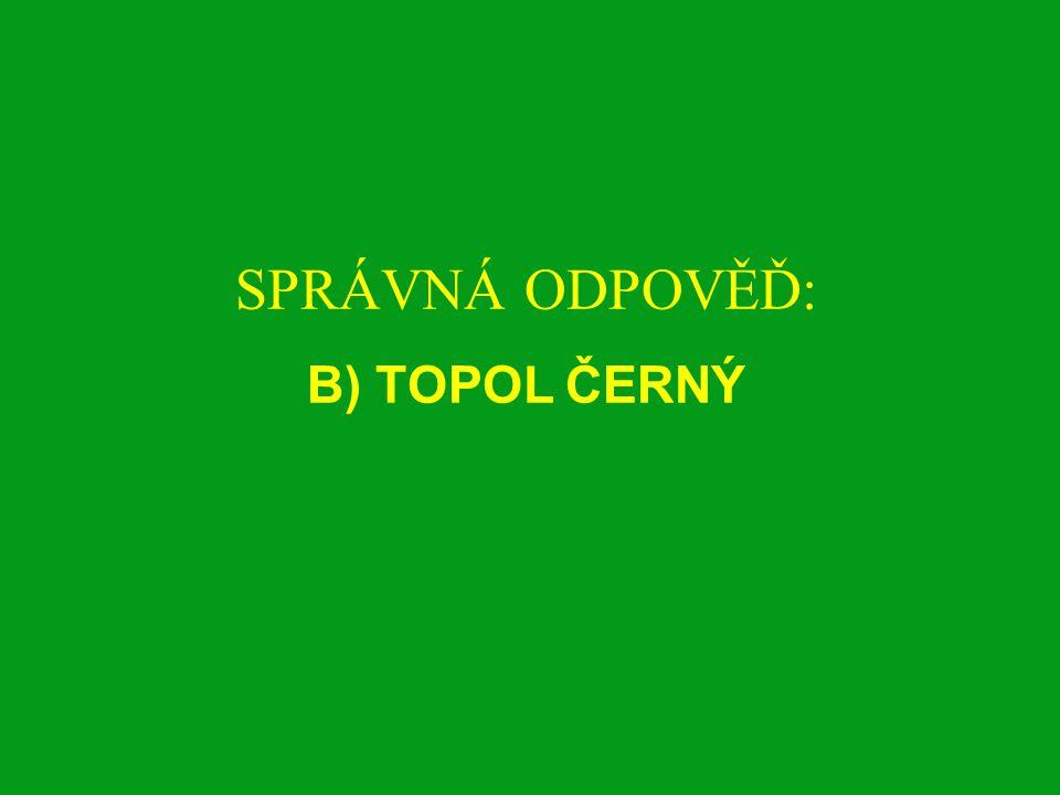 SPRÁVNÁ ODPOVĚĎ: B) TOPOL ČERNÝ