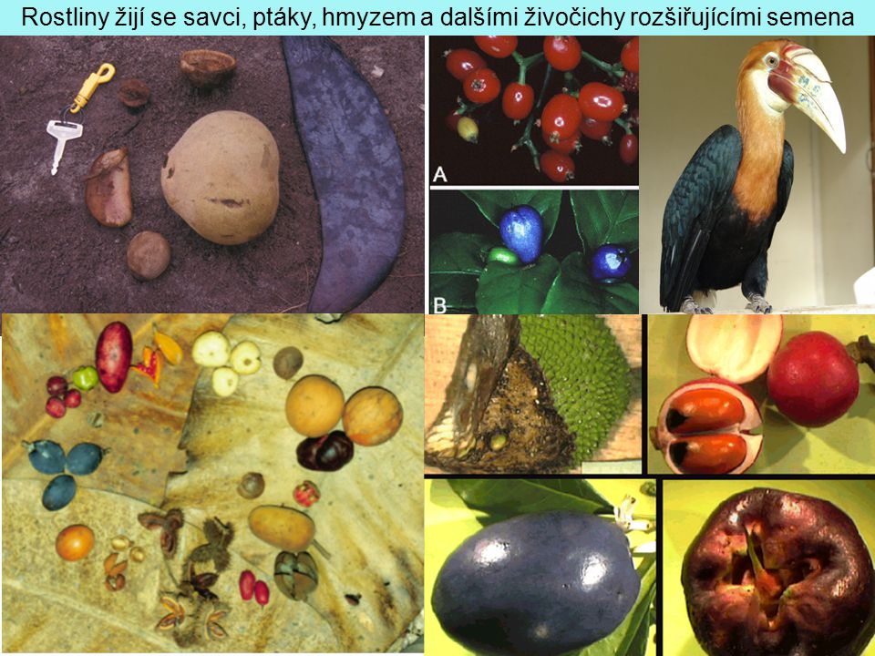 Rostliny žijí se savci, ptáky, hmyzem a dalšími živočichy rozšiřujícími semena