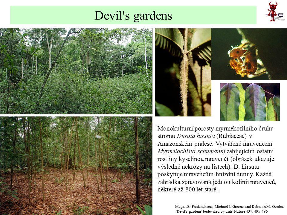 Devil s gardens