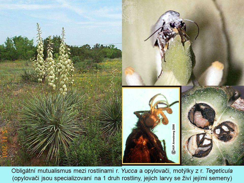 Obligátní mutualismus mezi rostlinami r. Yucca a opylovači, motýlky z r.