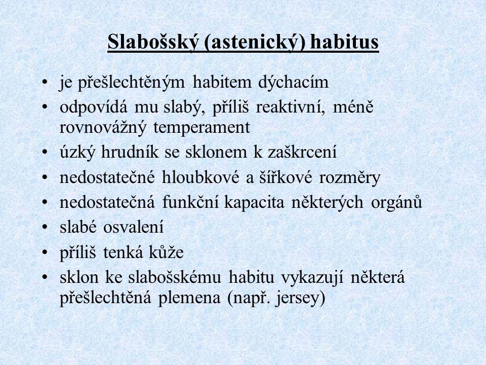 Slabošský (astenický) habitus