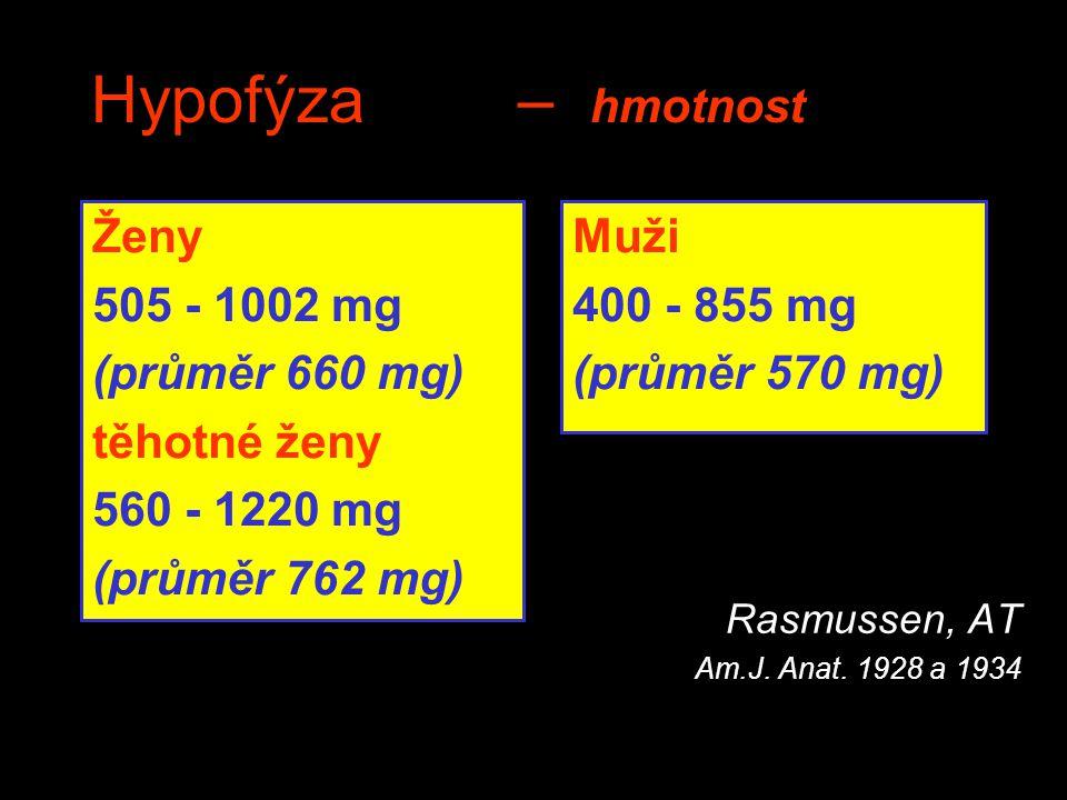 Hypofýza – hmotnost Ženy 505 - 1002 mg (průměr 660 mg) těhotné ženy 560 - 1220 mg (průměr 762 mg)