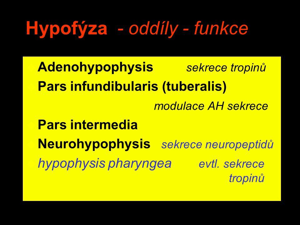 Hypofýza - oddíly - funkce