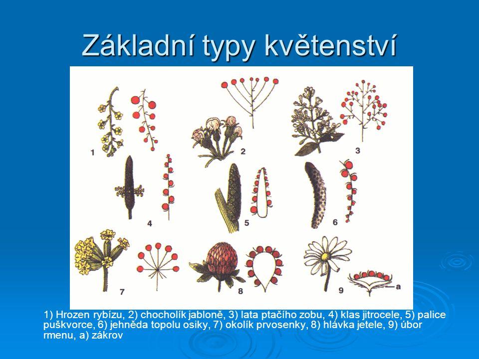 Základní typy květenství