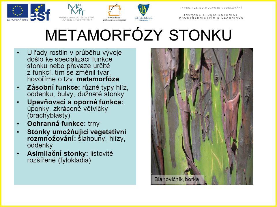METAMORFÓZY STONKU