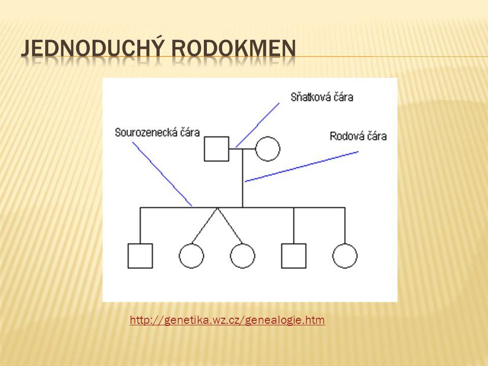 Jednoduchý rodokmen http://genetika.wz.cz/genealogie.htm