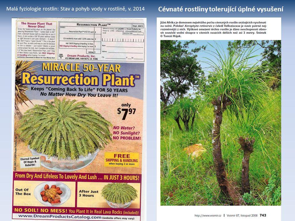 Cévnaté rostliny tolerující úplné vysušení