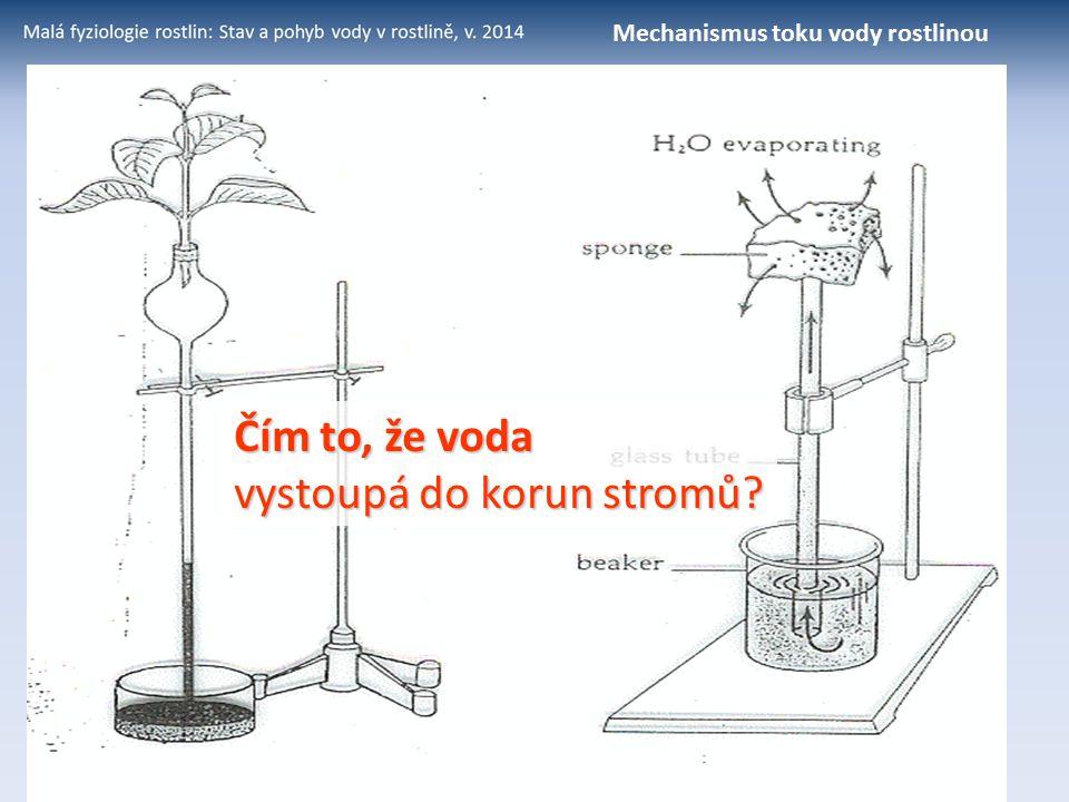 Mechanismus toku vody rostlinou