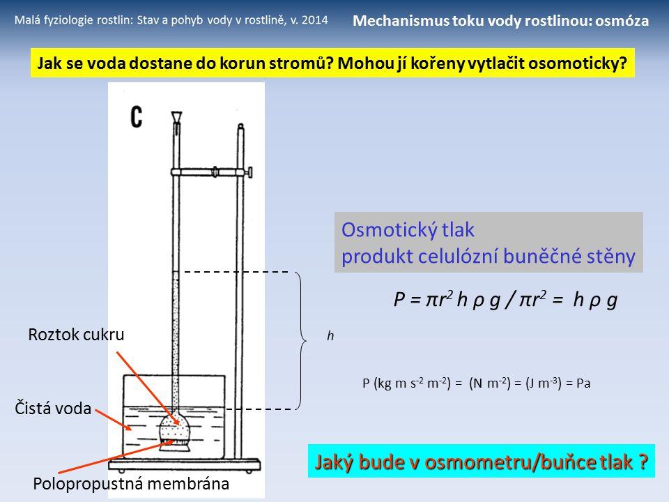 Mechanismus toku vody rostlinou: osmóza