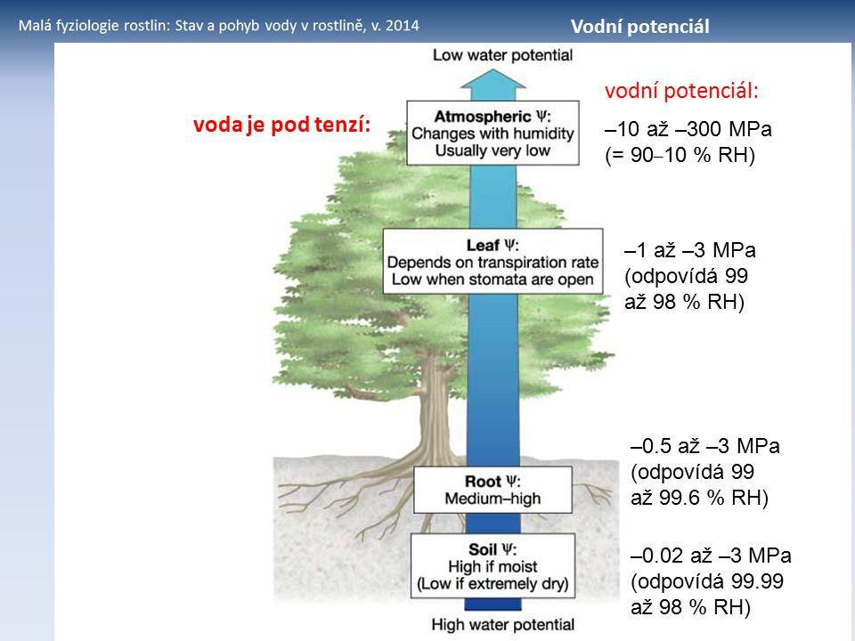 vodní potenciál: voda je pod tenzí: Vodní potenciál