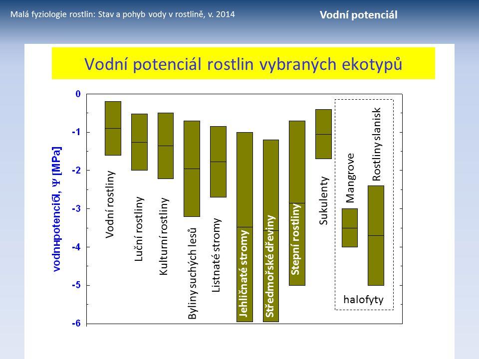 Vodní potenciál rostlin vybraných ekotypů