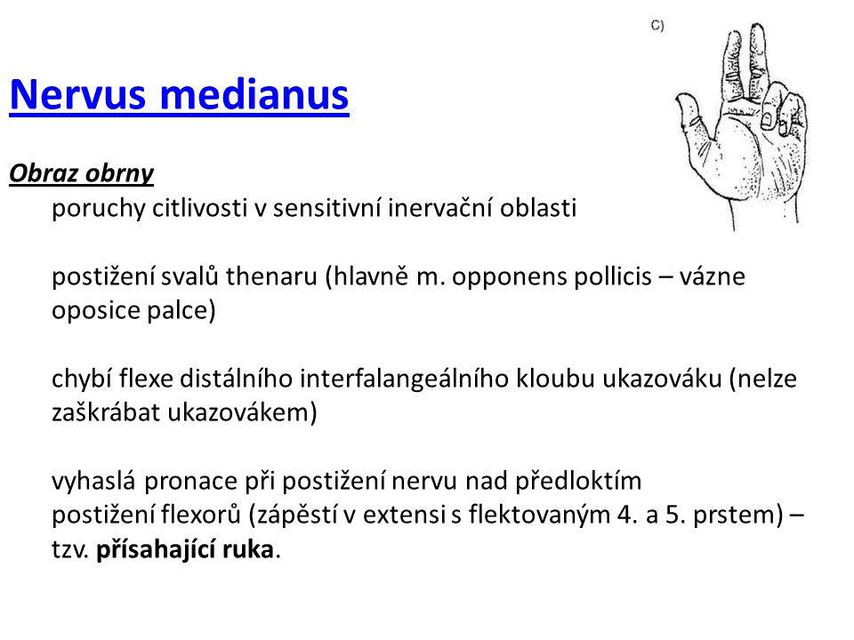 Nervus medianus Obraz obrny