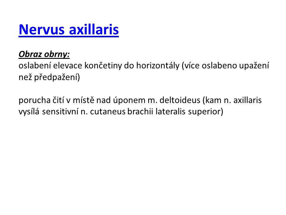 Nervus axillaris Obraz obrny: oslabení elevace končetiny do horizontály (více oslabeno upažení než předpažení)