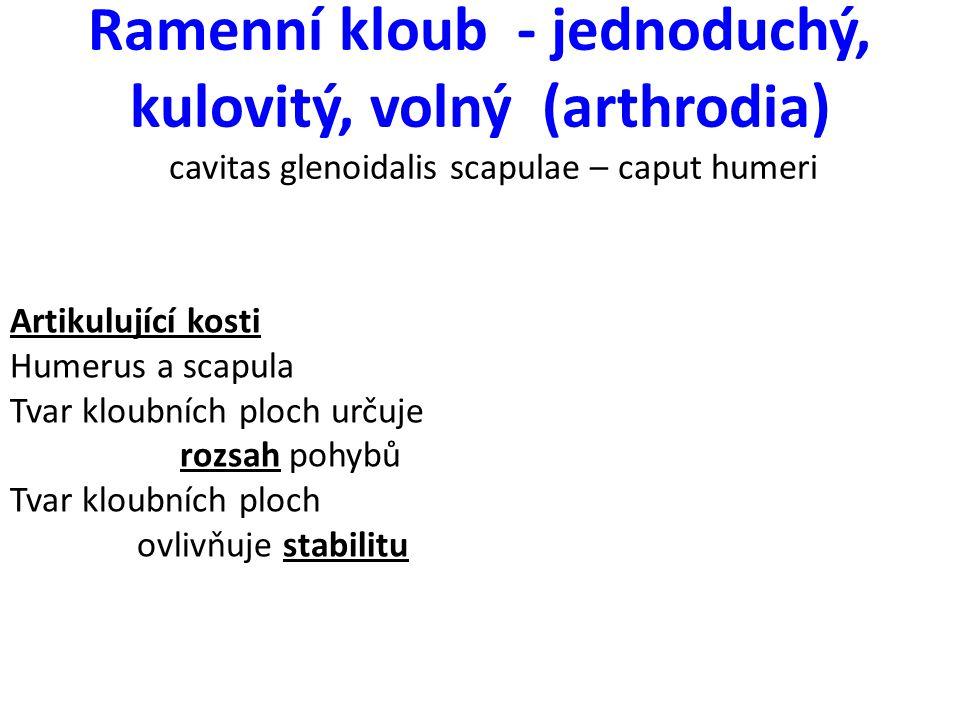 Ramenní kloub - jednoduchý, kulovitý, volný (arthrodia) cavitas glenoidalis scapulae – caput humeri
