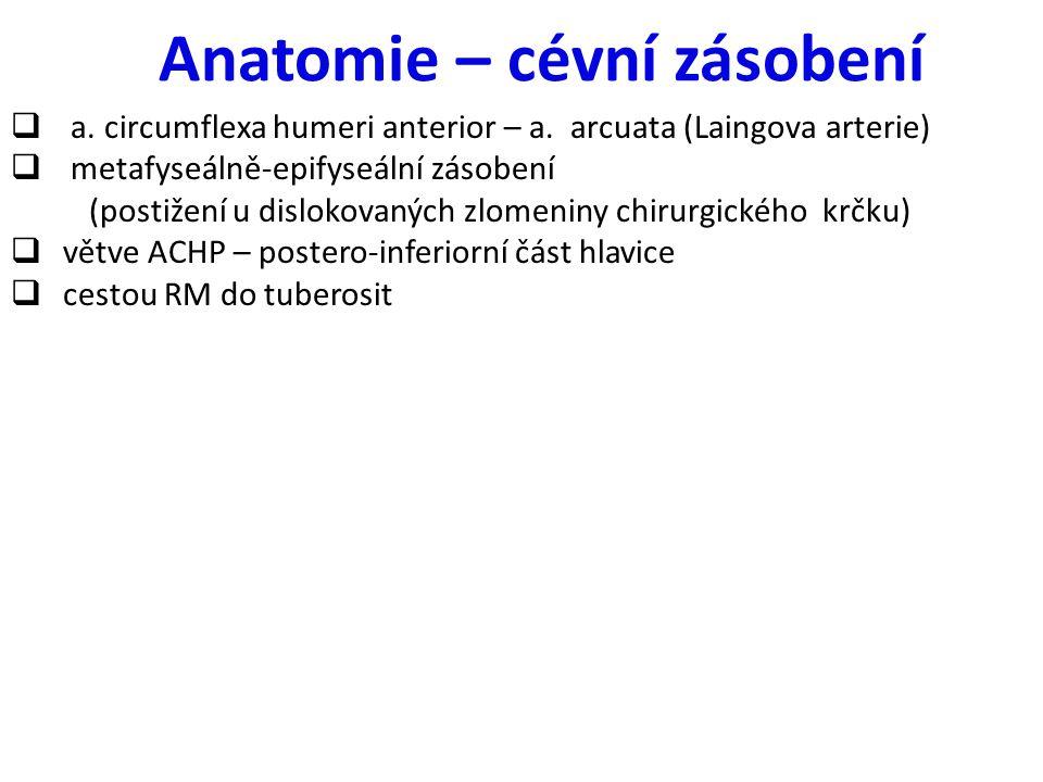 Anatomie – cévní zásobení