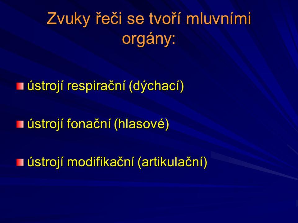 Zvuky řeči se tvoří mluvními orgány: