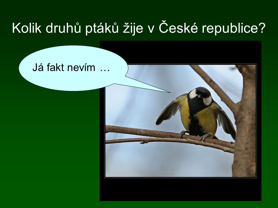 Kolik druhů ptáků žije v České republice