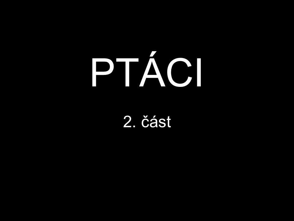 PTÁCI 2. část