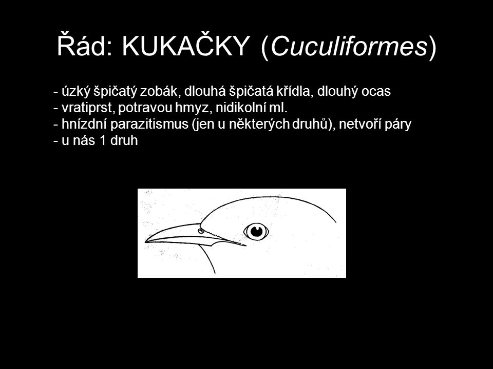 Řád: KUKAČKY (Cuculiformes)