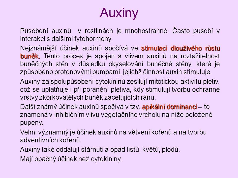Auxiny Působení auxinů v rostlinách je mnohostranné. Často působí v interakci s dalšími fytohormony.