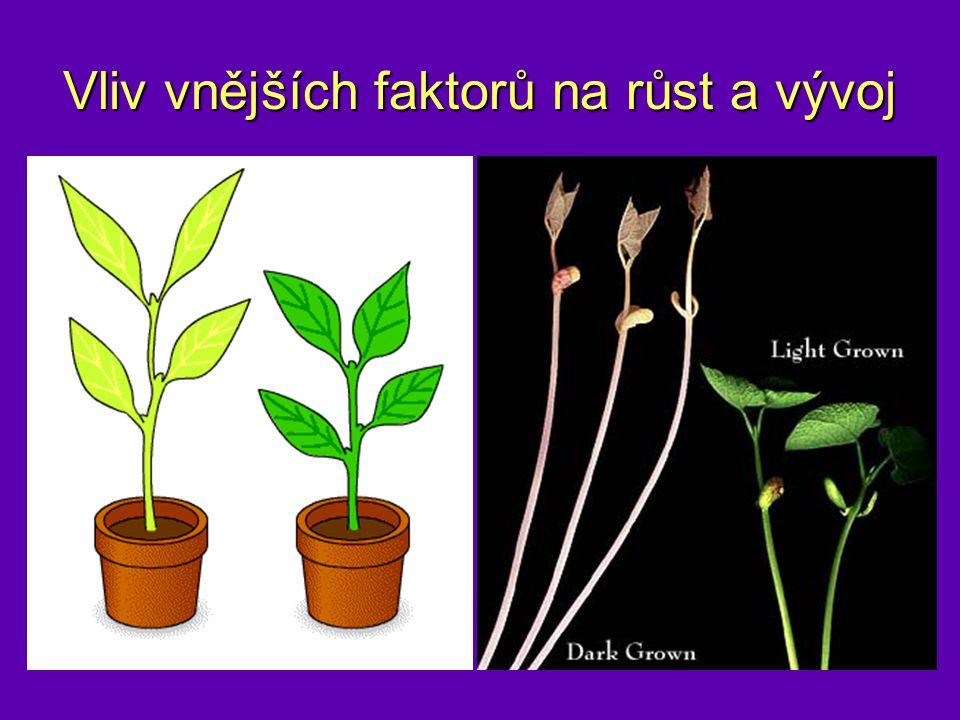 Vliv vnějších faktorů na růst a vývoj