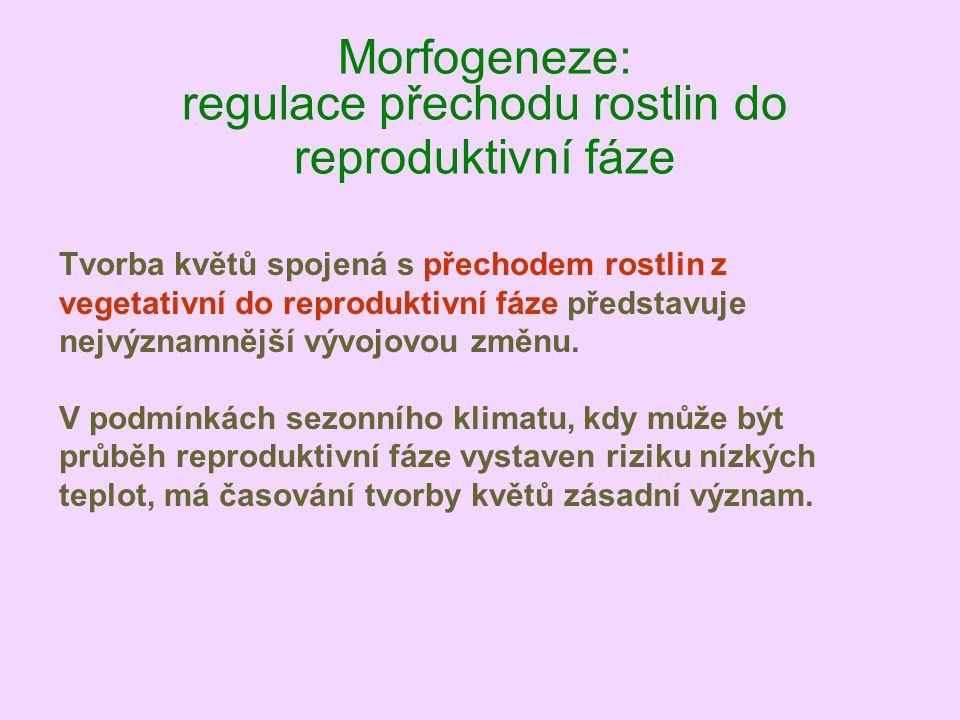 Morfogeneze: regulace přechodu rostlin do reproduktivní fáze