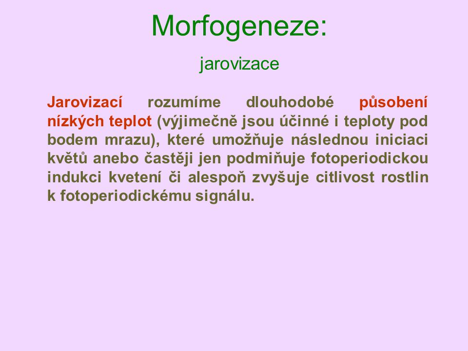 Morfogeneze: jarovizace