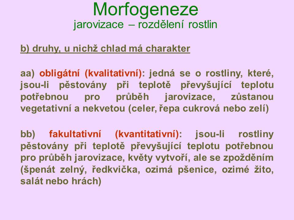 Morfogeneze jarovizace – rozdělení rostlin