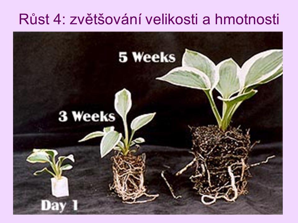 Růst 4: zvětšování velikosti a hmotnosti