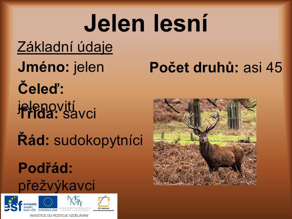 Jelen lesní Základní údaje Jméno: jelen Počet druhů: asi 45