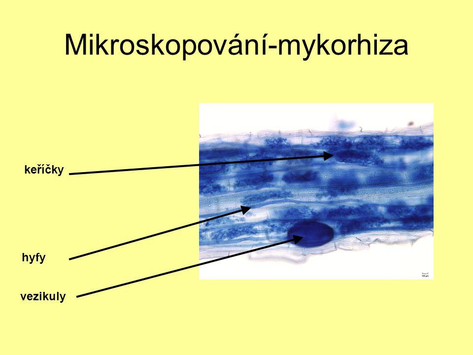Mikroskopování-mykorhiza