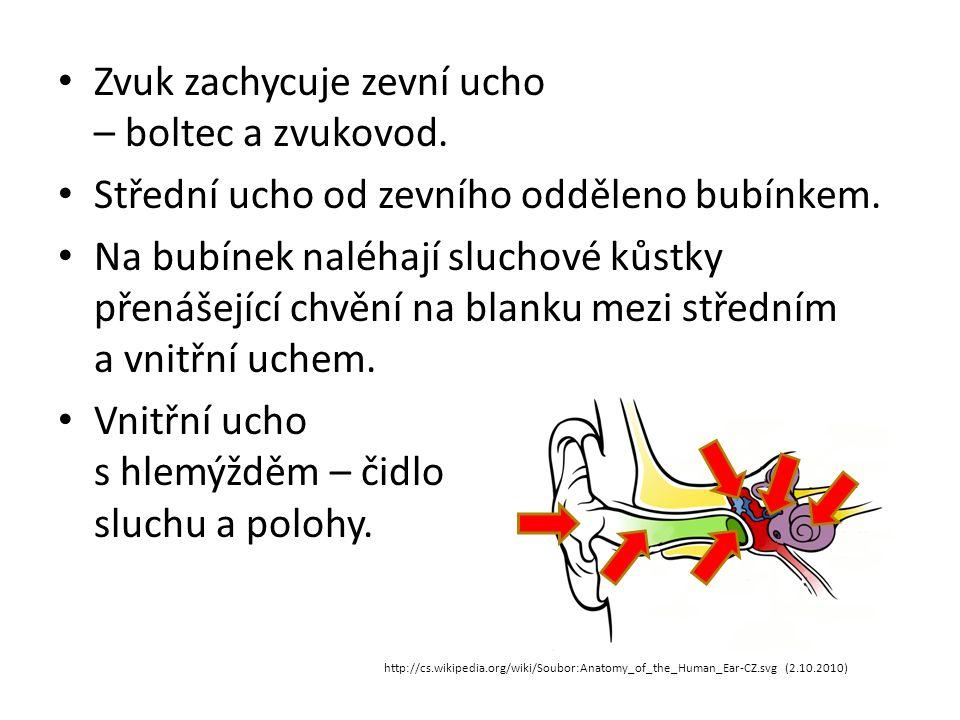Zvuk zachycuje zevní ucho – boltec a zvukovod.