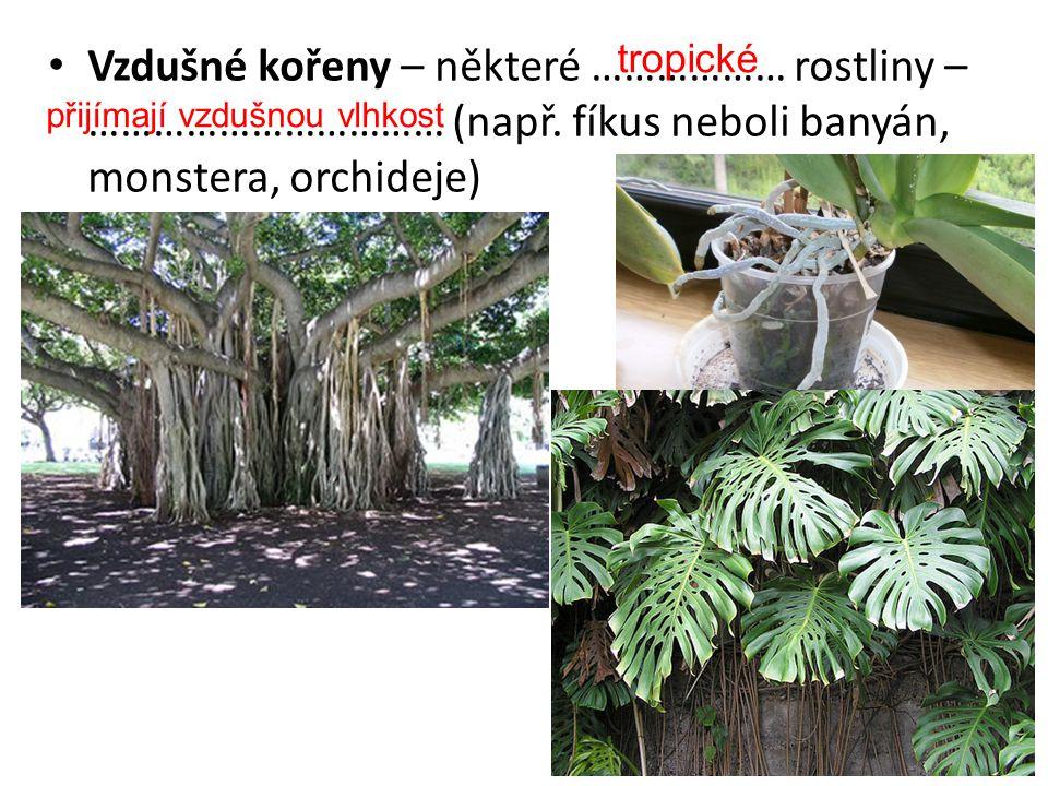 Vzdušné kořeny – některé ……………… rostliny – …………………………… (např