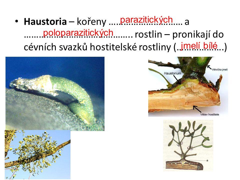 Haustoria – kořeny ………………………… a ……………………………………
