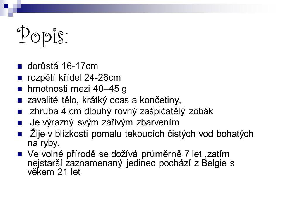 Popis: dorůstá 16-17cm rozpětí křídel 24-26cm hmotnosti mezi 40–45 g