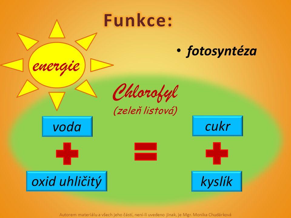 energie Chlorofyl Funkce: fotosyntéza voda cukr oxid uhličitý kyslík