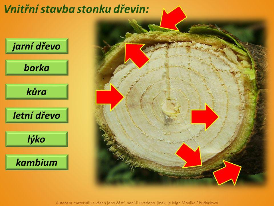 Vnitřní stavba stonku dřevin: