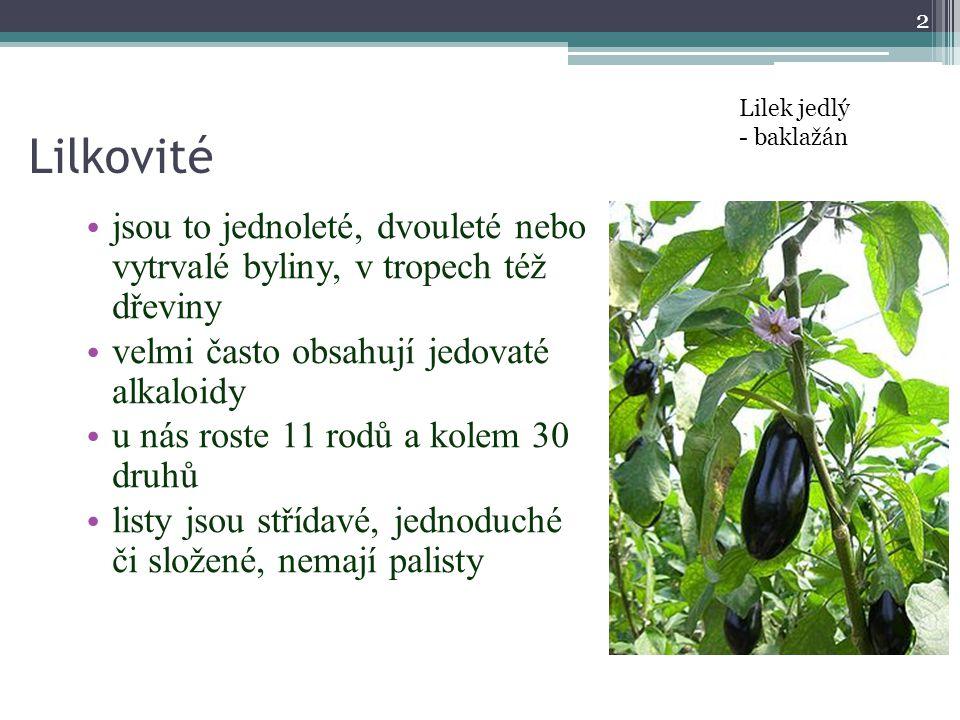 Lilek jedlý - baklažán. Lilkovité. jsou to jednoleté, dvouleté nebo vytrvalé byliny, v tropech též dřeviny.