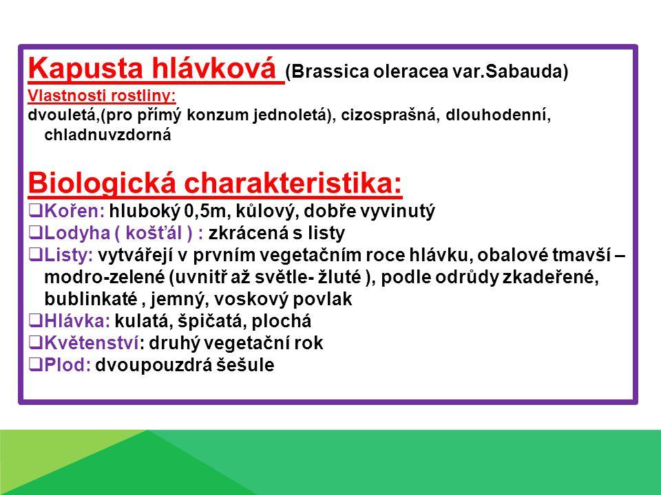 Kapusta hlávková (Brassica oleracea var.Sabauda)